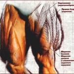 Фитнес програма за крака