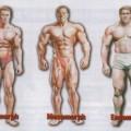 bodytypes7vq-300x212